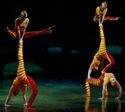 cirque_du_soleil_OVO_acrosport